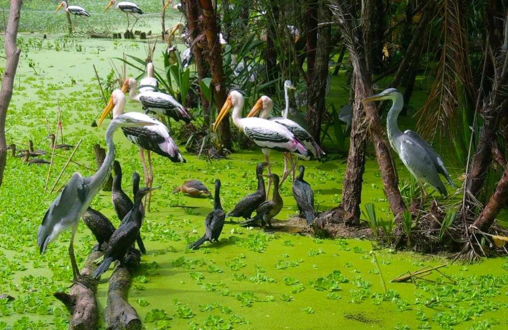 Tra Su Indigo forest